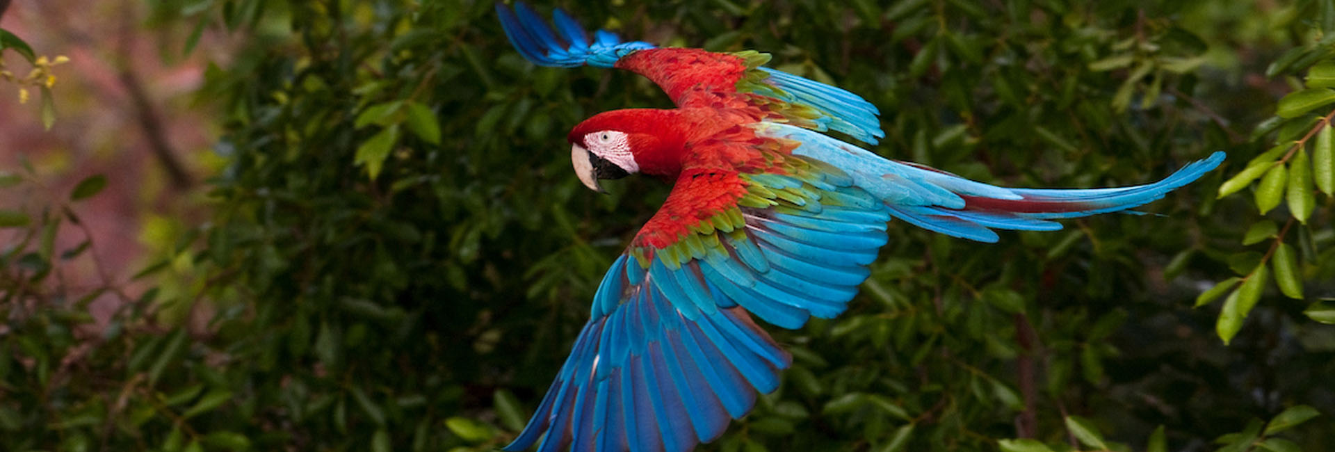 Macaw in the Ecuadorian Amazon